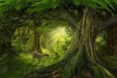 Foresta pluviale tropicale asiatica in Thailandia