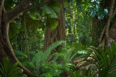 Asian tropical rainforest in thailand
