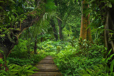 Asian tropical rainforest in thailand