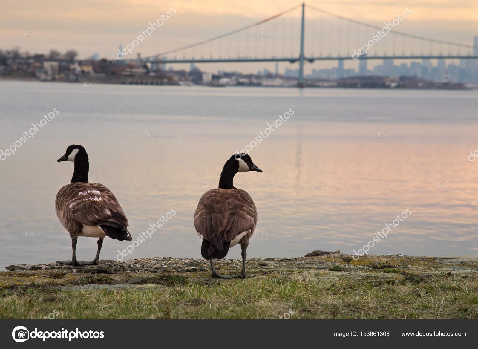 canada goose bronx ny