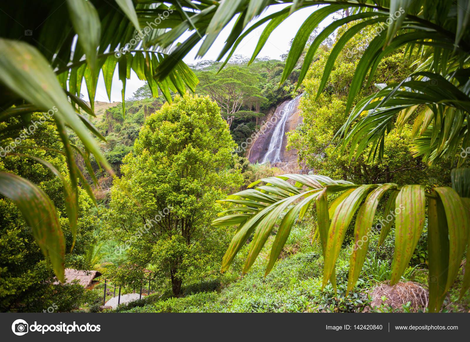 Planten En Bomen : Waterval in de jungle. sri lanka. groene planten en bomen