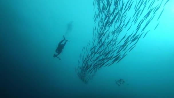 Scuba diver near a school of barracuda fish - Backlight underwater scene.