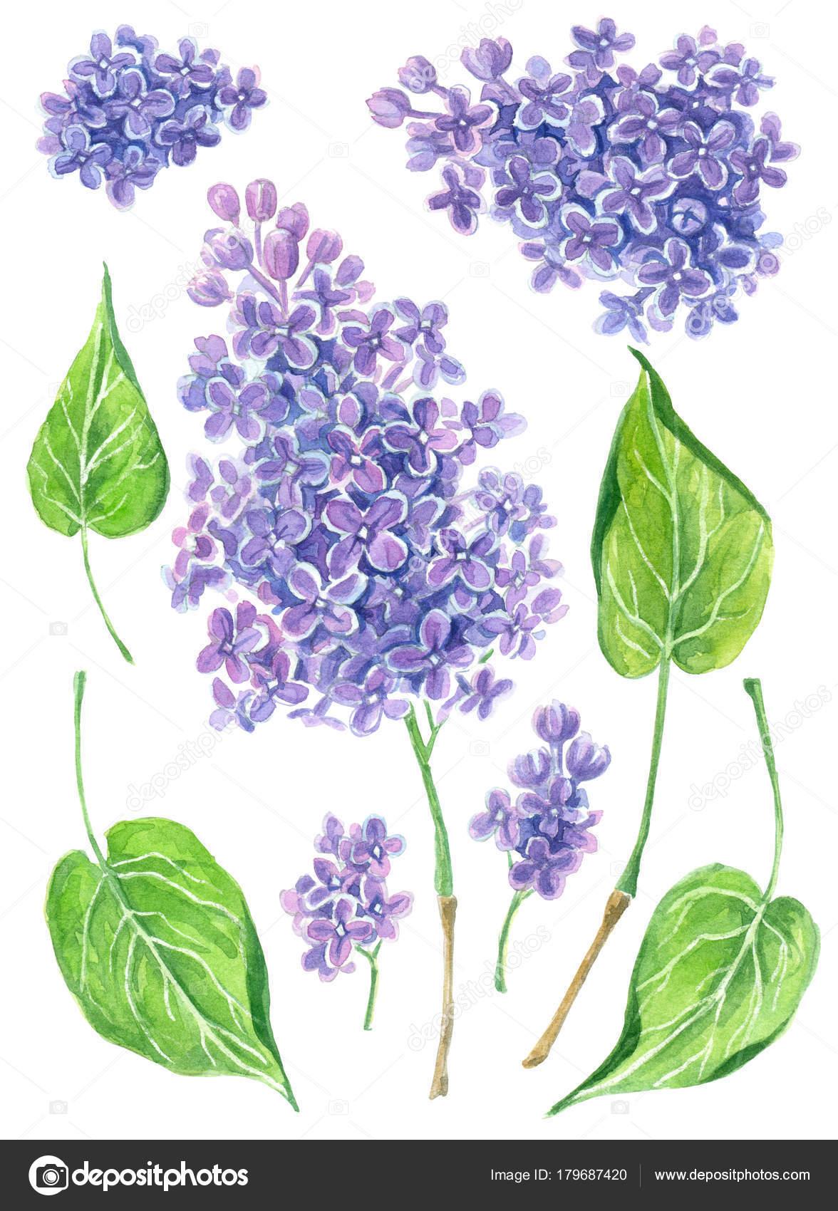 Satz von Aquarell lila Blumen — Stockfoto © katerinamk #179687420