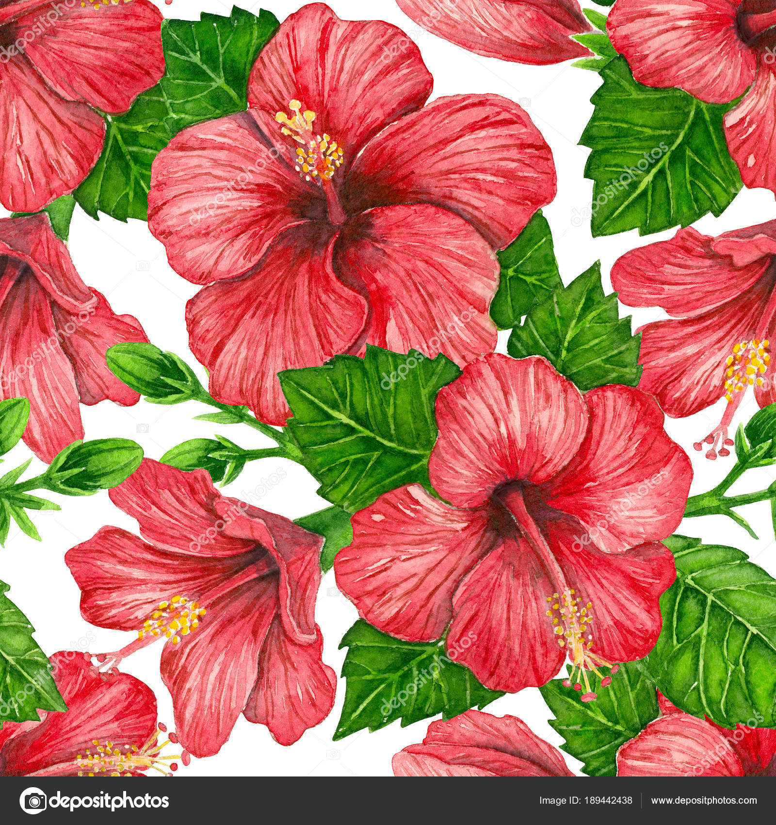 Hibiscus Flowers Watercolor Pattern Stock Photo Katerinamk
