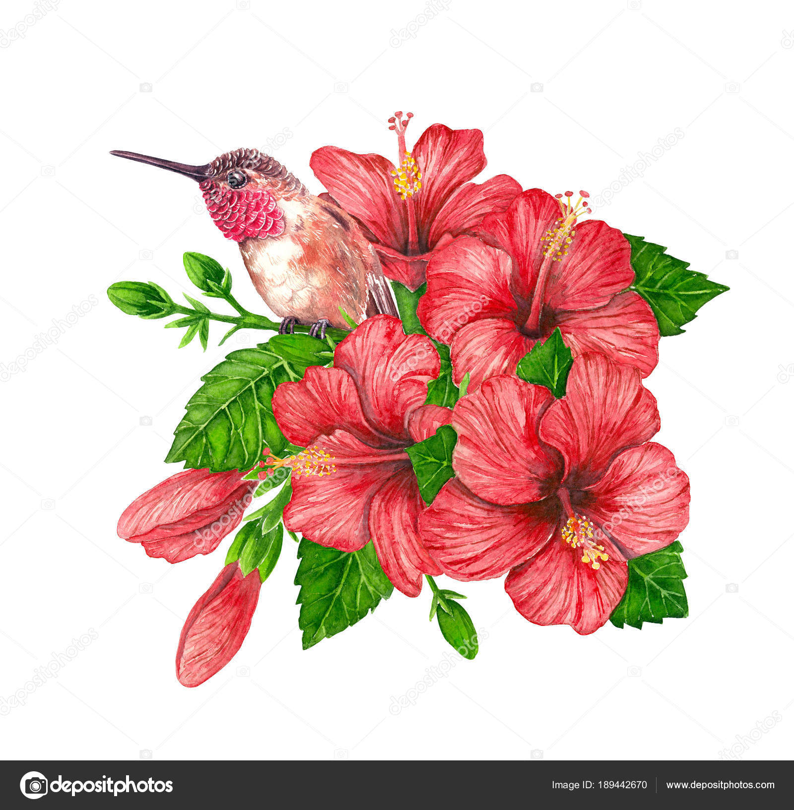 Watercolor bouquet of hibiscus flowers and hummingbird — Stock Photo ...
