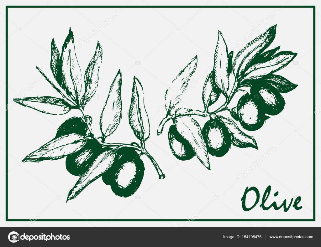 Painted olive branch — Stock Vector © anna_wizard #154108476