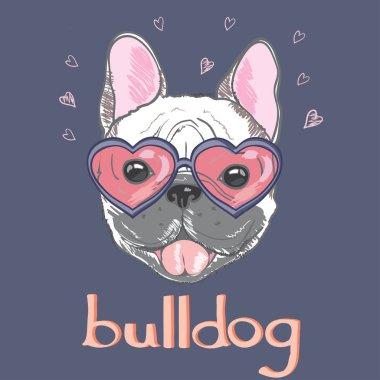 bulldog in heart shaped sunglasses