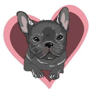 french bulldog in heart