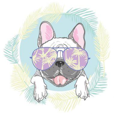 French bulldog head isolated on white background. Vector illustr