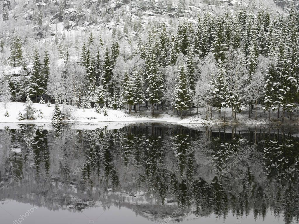Winter lake and snow covered trees