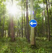 Nyíl útjelzési lóg a fán