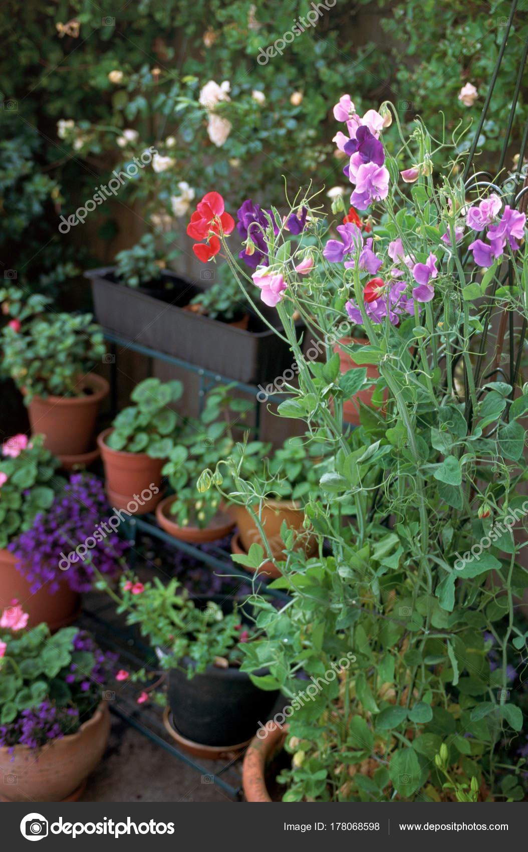Topfpflanzen Und Blumen U2014 Stockfoto