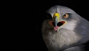 Falcon on a black background