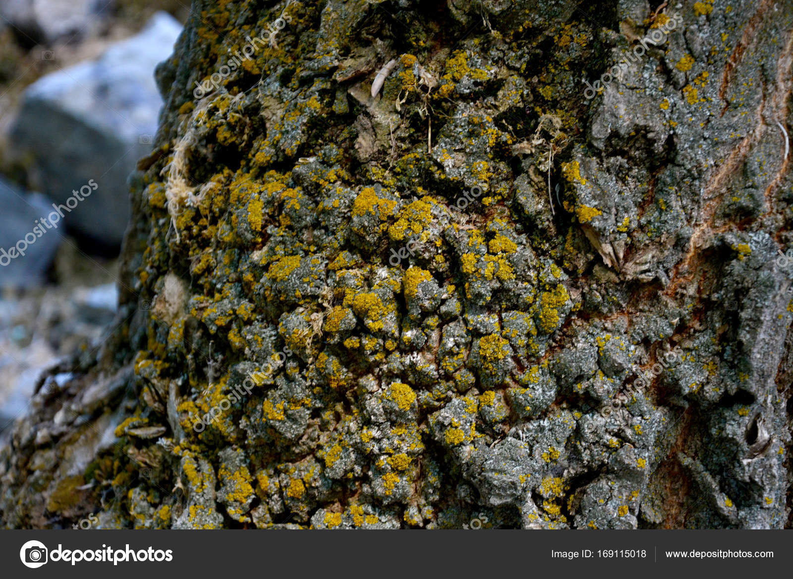 Old Walnut Tree Trunk Detail Texture Natural Background