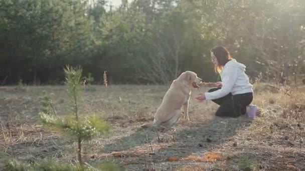 Spaziergang mit Hund im Frühlingswald