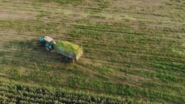 Traktor egy termés szilázs egy pótkocsi lovagol egy frissen kaszált területen a kukorica vidéken