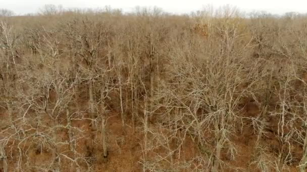 Suché větve holých stromů, letecký výhled. Příroda jde do zimy