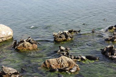 Baikal seals lie on rocks on the Ushkan Islands