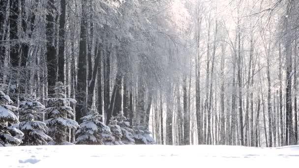 Schneefall im Winter im Wald, weicher, verschneiter Weihnachtsmorgen mit fallendem Schnee
