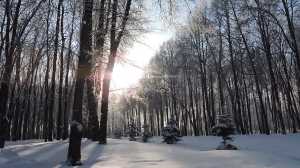 Sníh v zimě v lese, měkké zasněžené vánoční ráno s padajícím sněhem