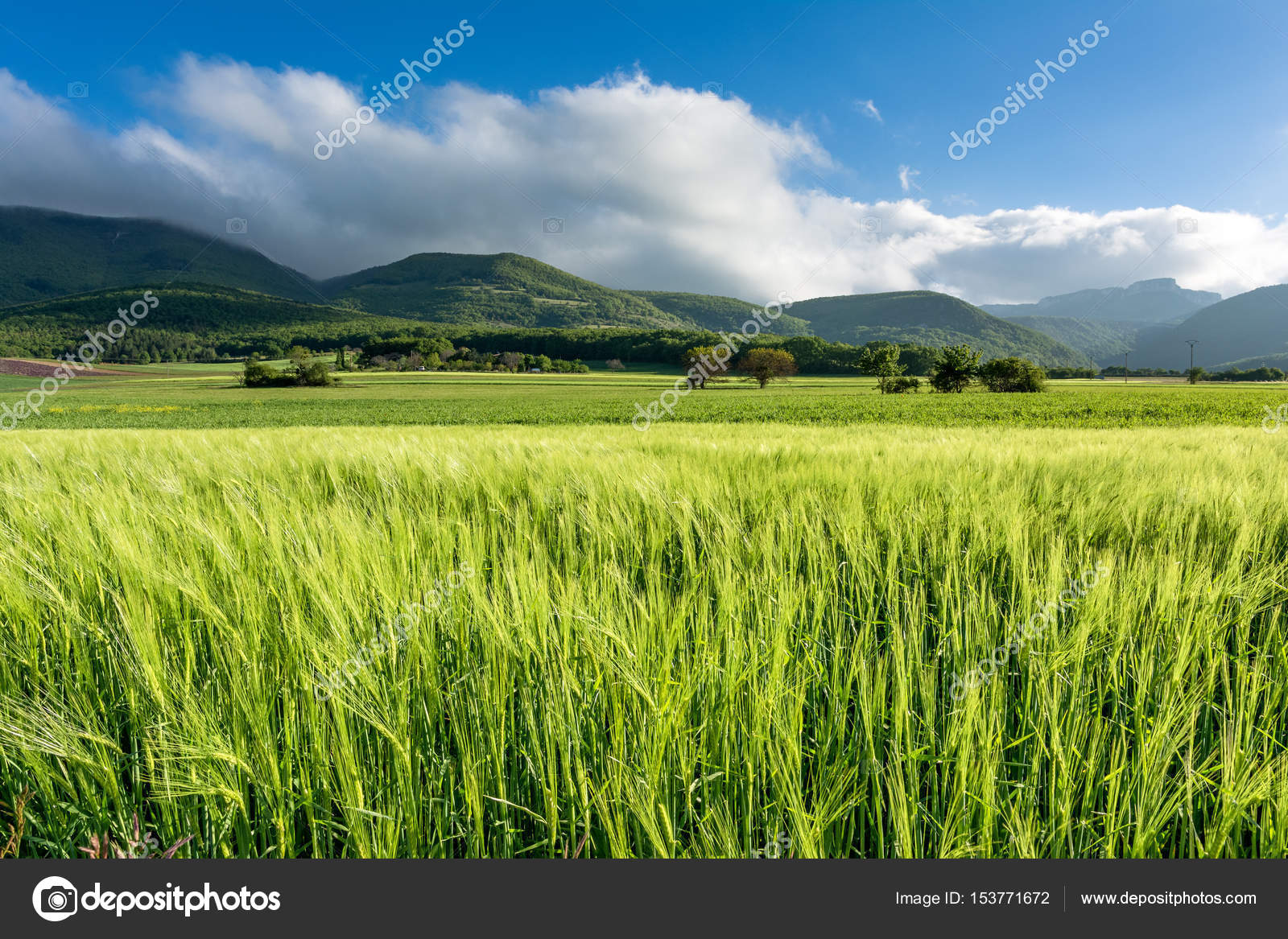 Cornfield On A Windy Day In The French Department Of Drome With Mountains Vercors Background Photo By Infophotogranary