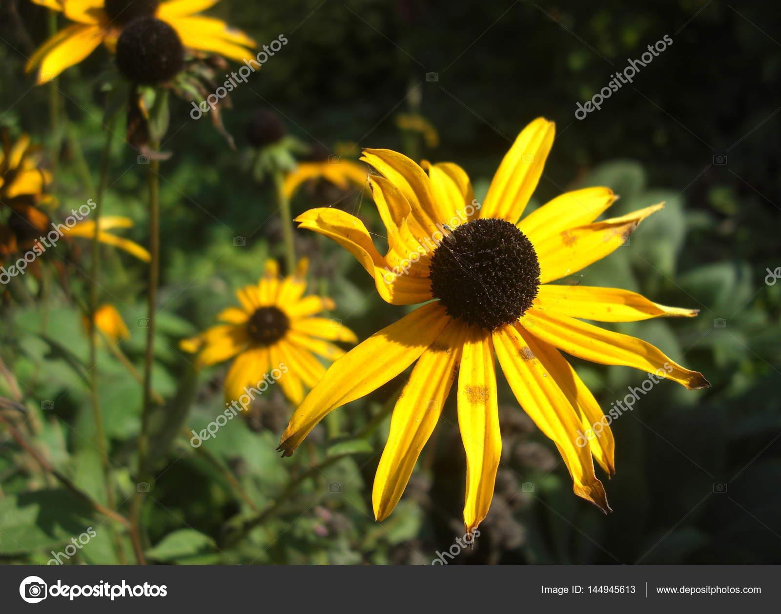 Um Close Up De Uma Flor No Deserto Stock Photo Mvdberk 144945613