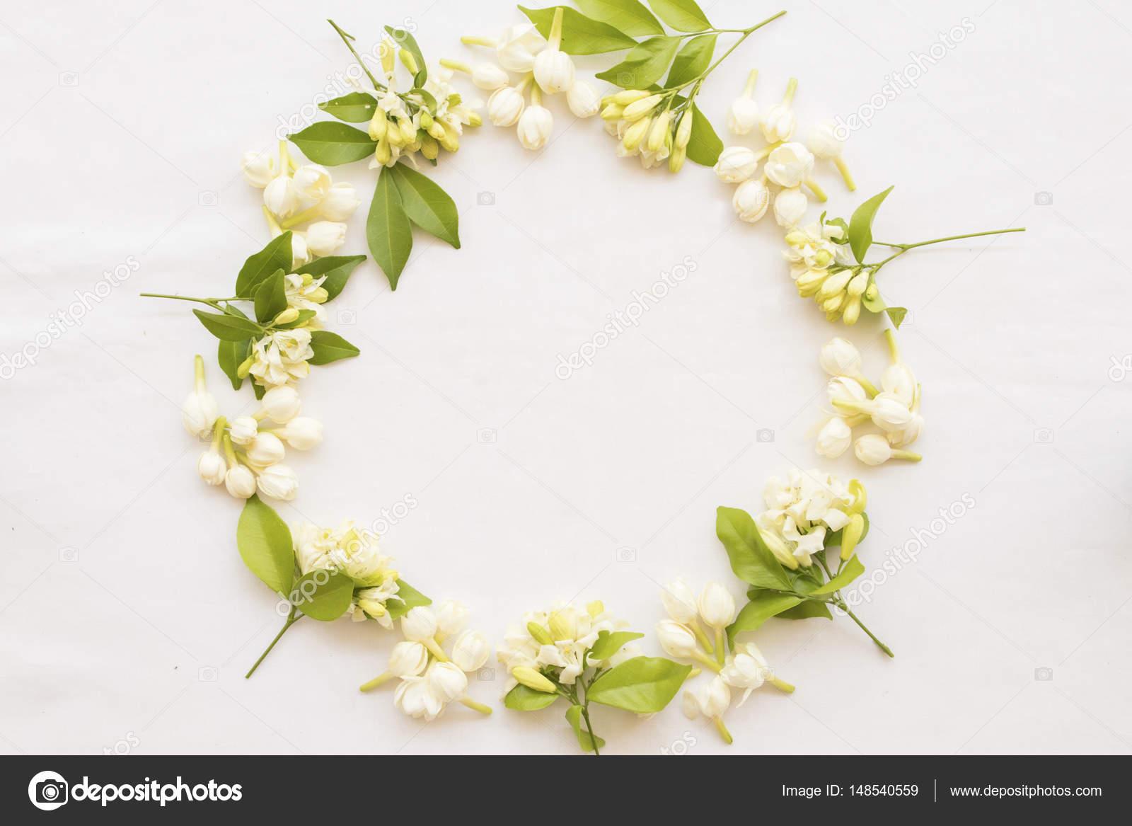 Jasmine white flowers frame vintage on white stock photo jasmine white flowers frame vintage on white stock photo izmirmasajfo