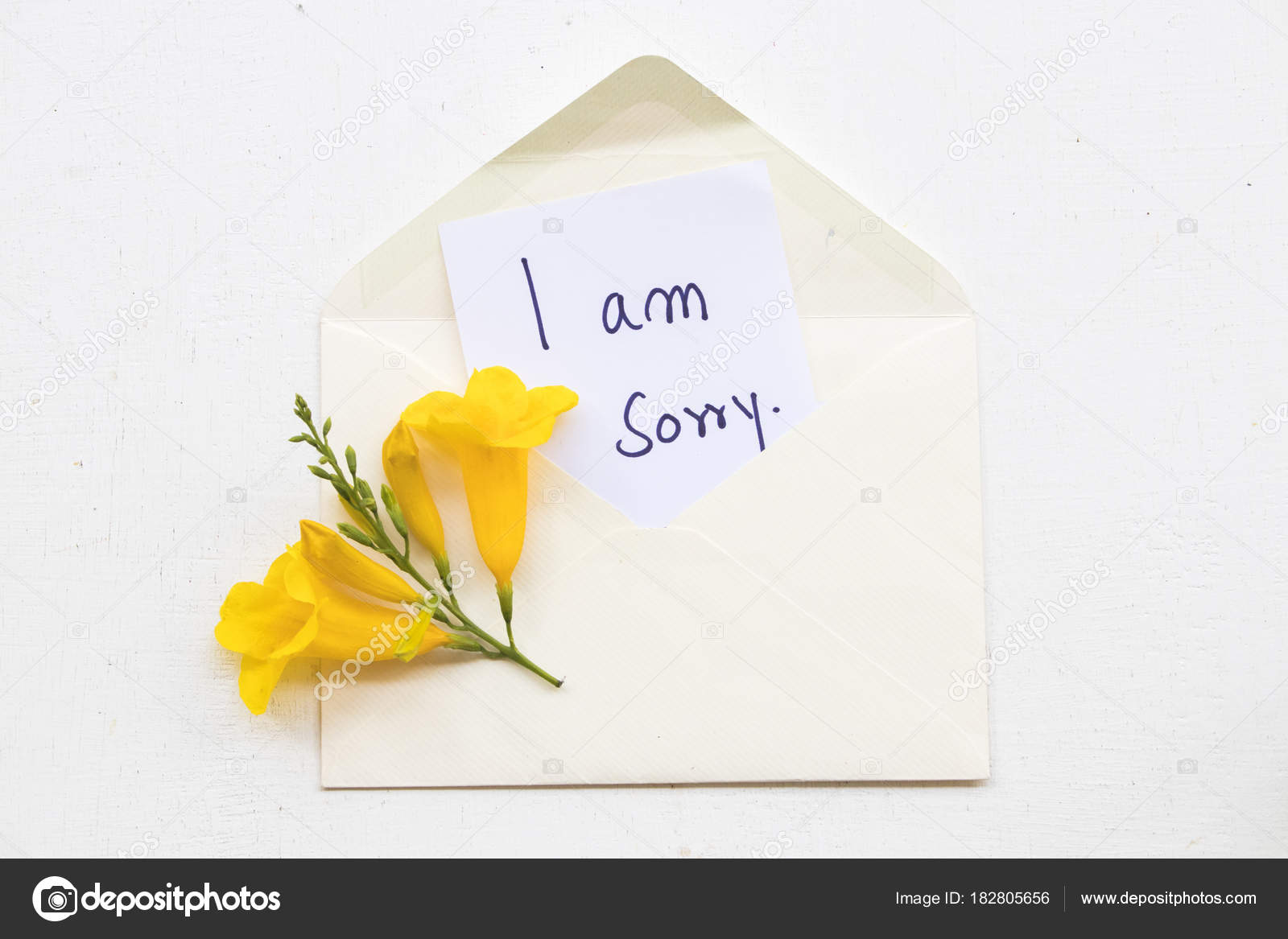Pictures Stucky Sorry Message Card Yellow Flower Envelope