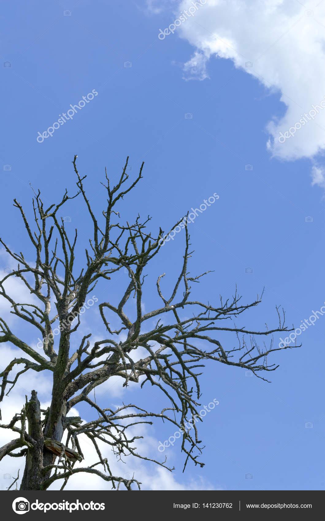 gedroogde boom