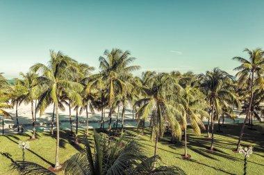 Public beach behind the palm trees in Miami Beach