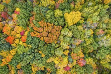 Aerial view of colorful forest treetops