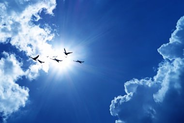 Blue sky with flying birds natural background