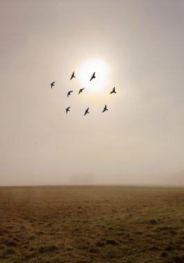 Fog in the autumn field with flock of birds