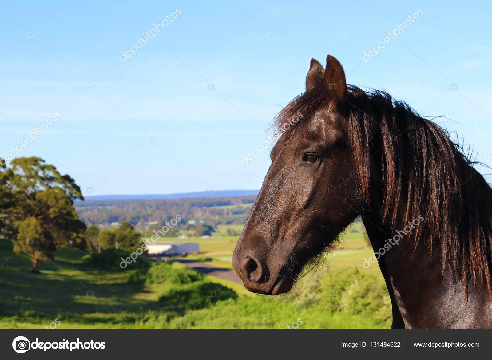 Pferden aus Australien Astrologie frei