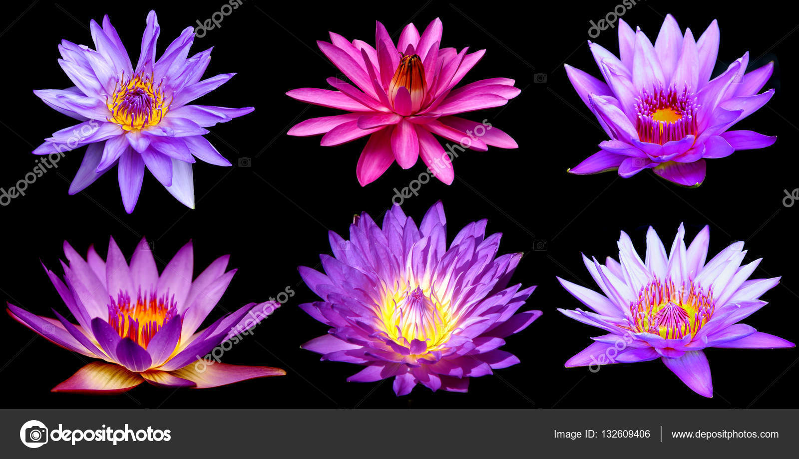 Purple water lily flower lotus over black background top view purple water lily flower lotus over black background top view stock photo izmirmasajfo