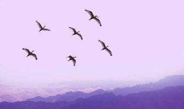 Flying birds over purple background landscape