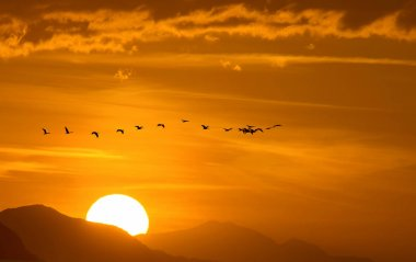 Migratory Birds Flying Over the Mountain