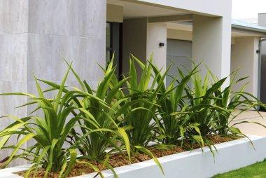 Modern front yard design ideas