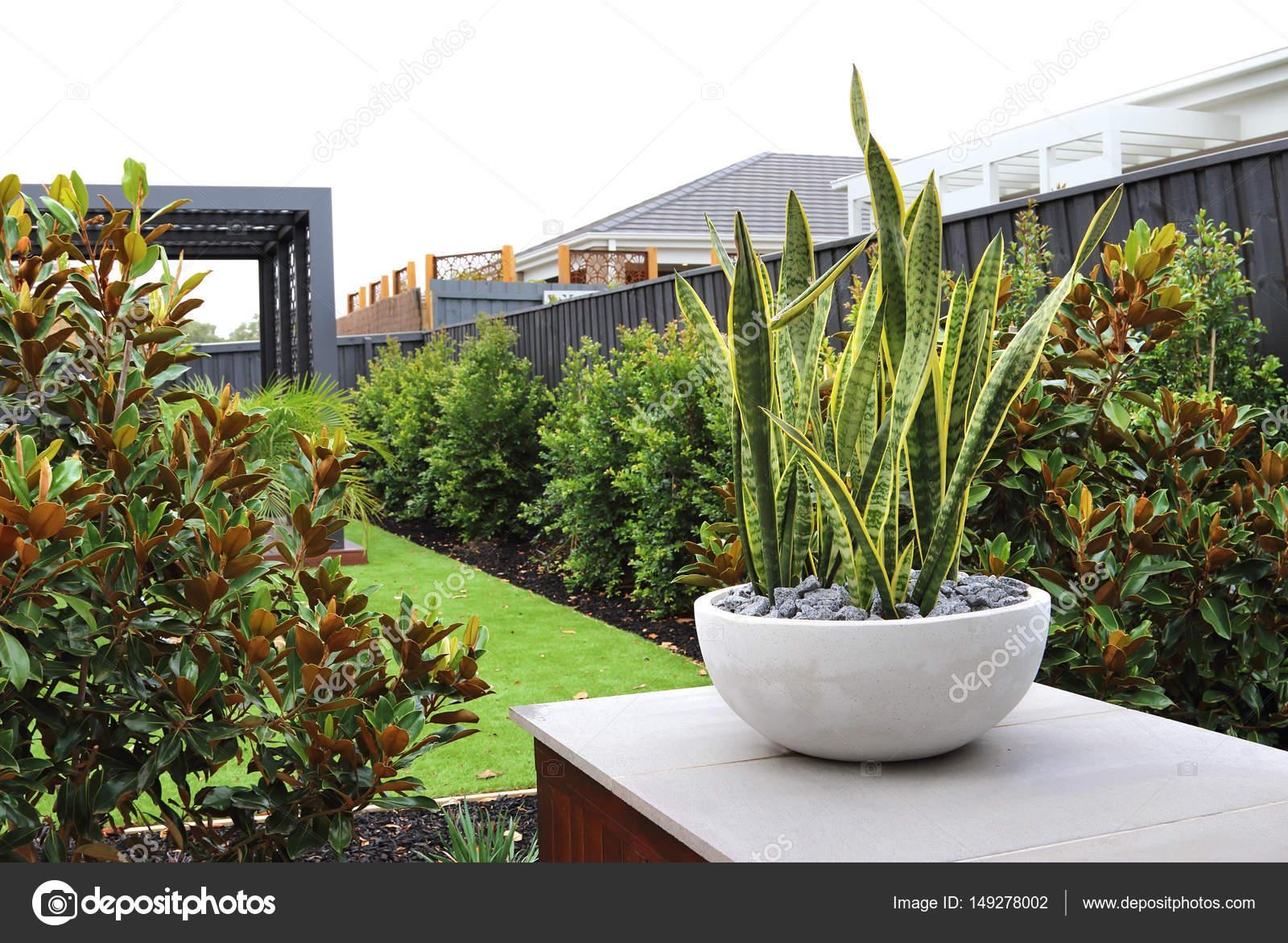 Hinterhof Garten Designs Für Kleine Hinterhöfe In Australien Mit  Textfreiraum U2014 Foto Von Bolina
