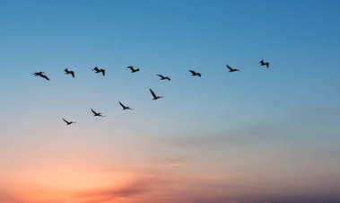 Pelicans over bright sunset