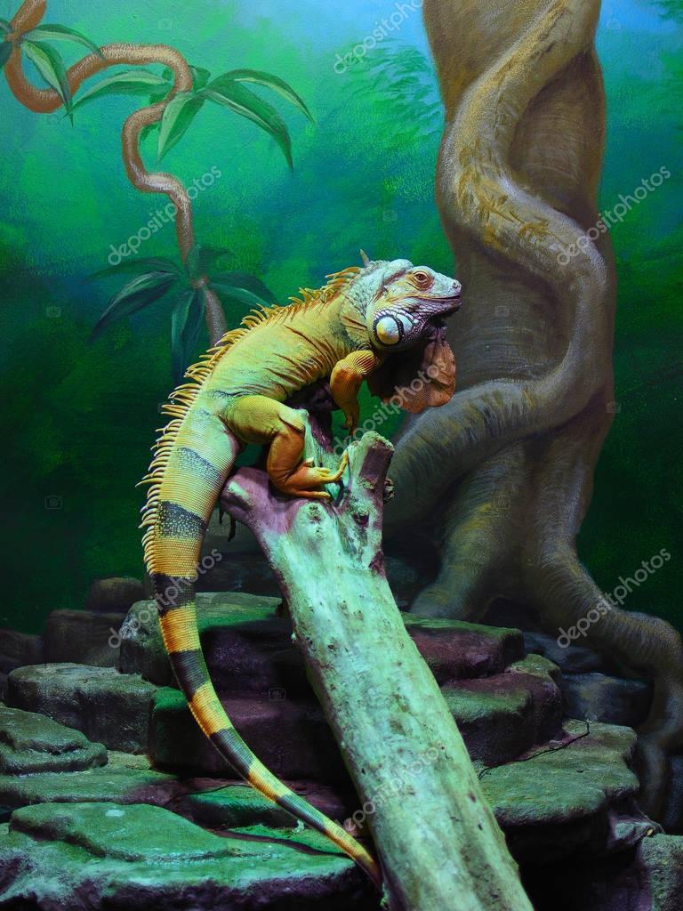 The green iguana (Iguana iguana) like a painting