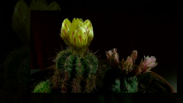 cactus yellow bloom