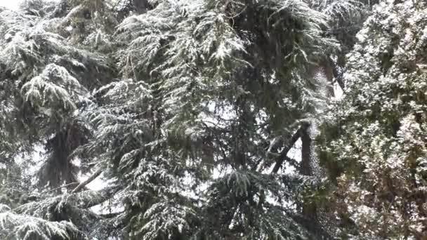 Schneefall im Forest Park. Winterlandschaft im verschneiten park