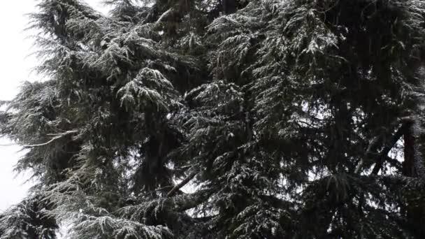Sněžení v lesoparku. Zimní krajina v zasněžených parku