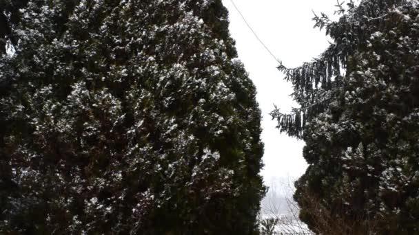 Sněžení v lesoparku. Zimní krajina v zasněžených parku.