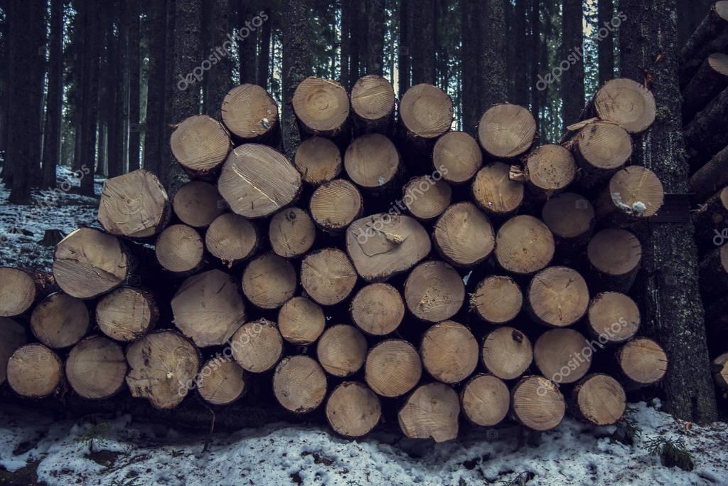 Firewood in winter forest
