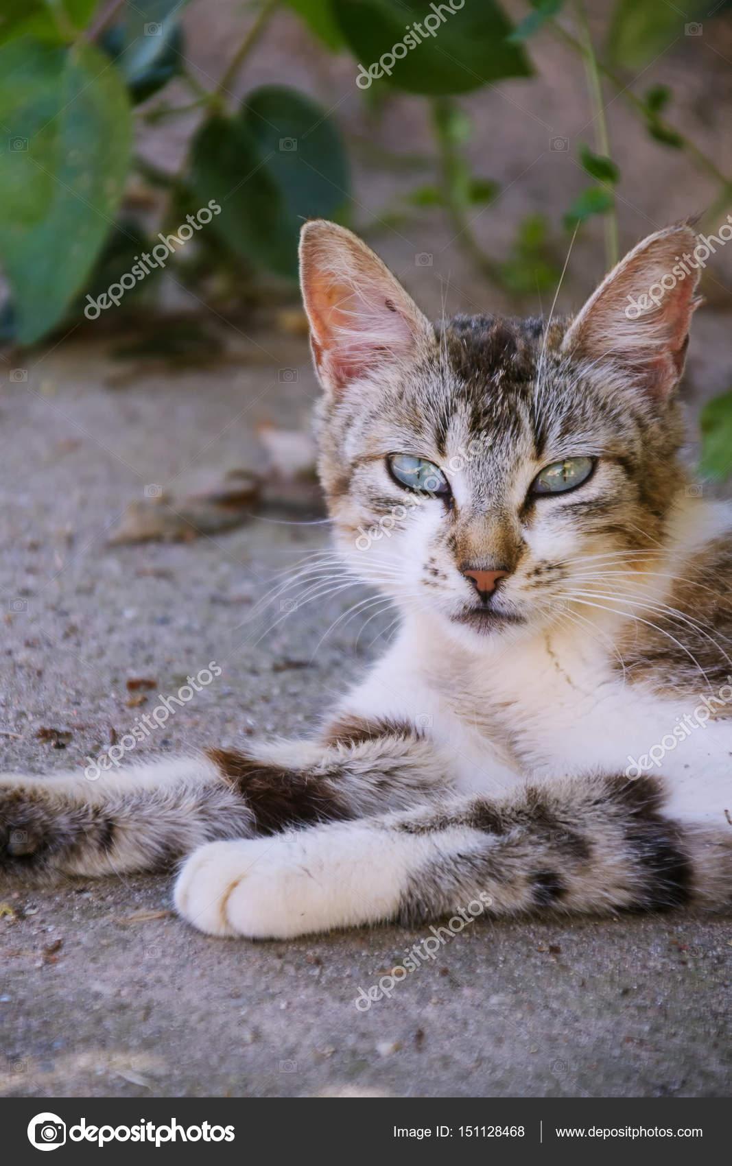 kočička obrázky detailní