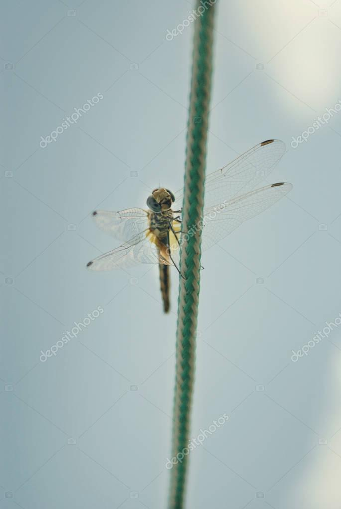 Dragonfly on green knot