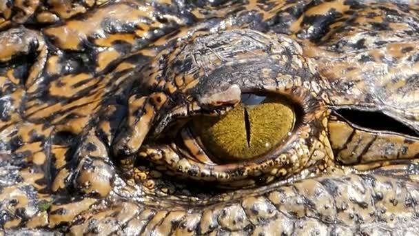 Zavřený krokodýla oka