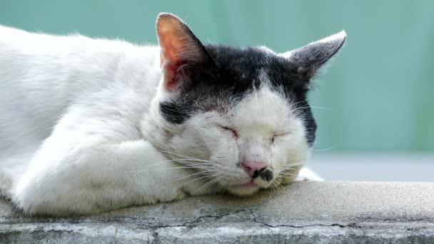 Stray cat sleeping